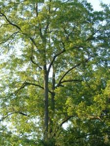 Treemorning